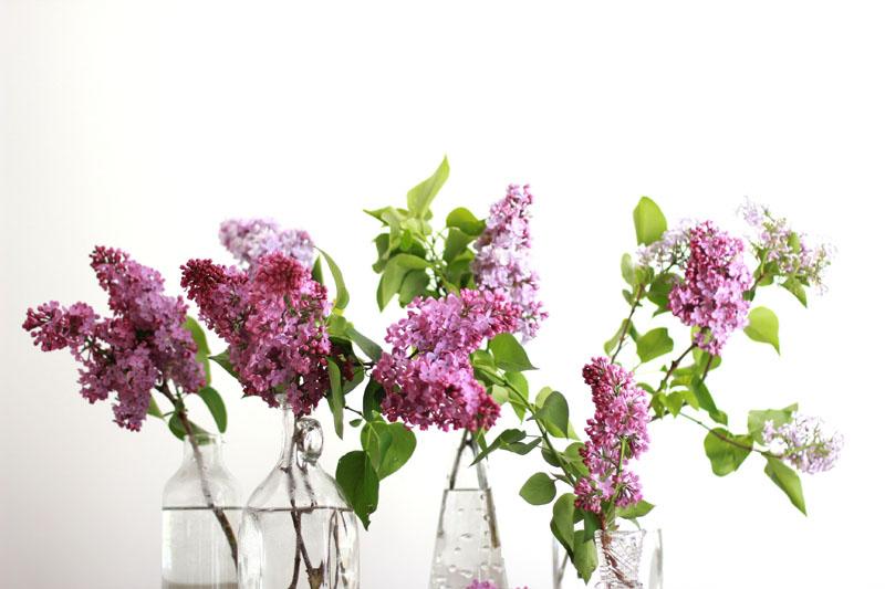 deko mit flieder - blumenarrangements in der vase | h.anna